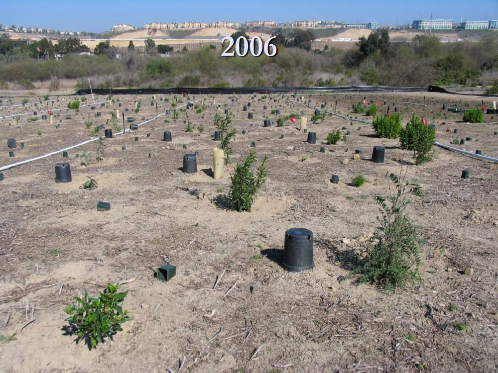 Restoration site at Los Peñasquitos Lagoon – 2006. Photo by State Parks