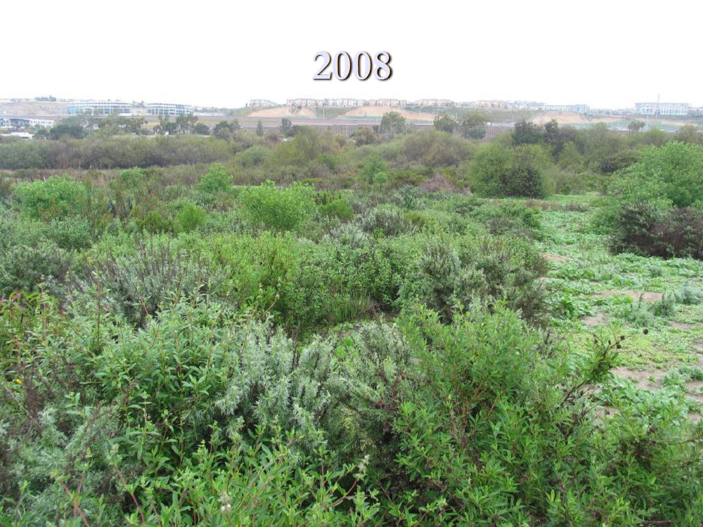Restoration site at Los Peñasquitos Lagoon – 2008.  Photo by State Parks.