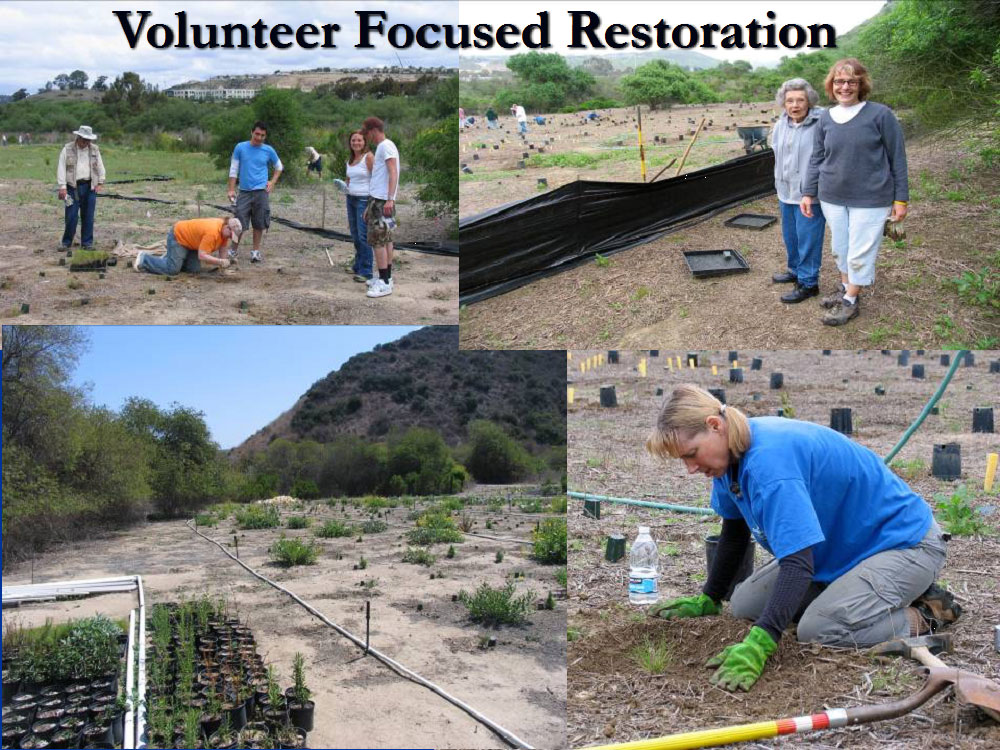 Volunteers helping restore native plants and habitat in Los Peñasquitos Lagoon.  Photos by State Parks.